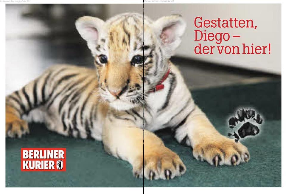Bernau: Findel-Tiger DIEGO hat nun sein eigenes Poster mit Autogramm