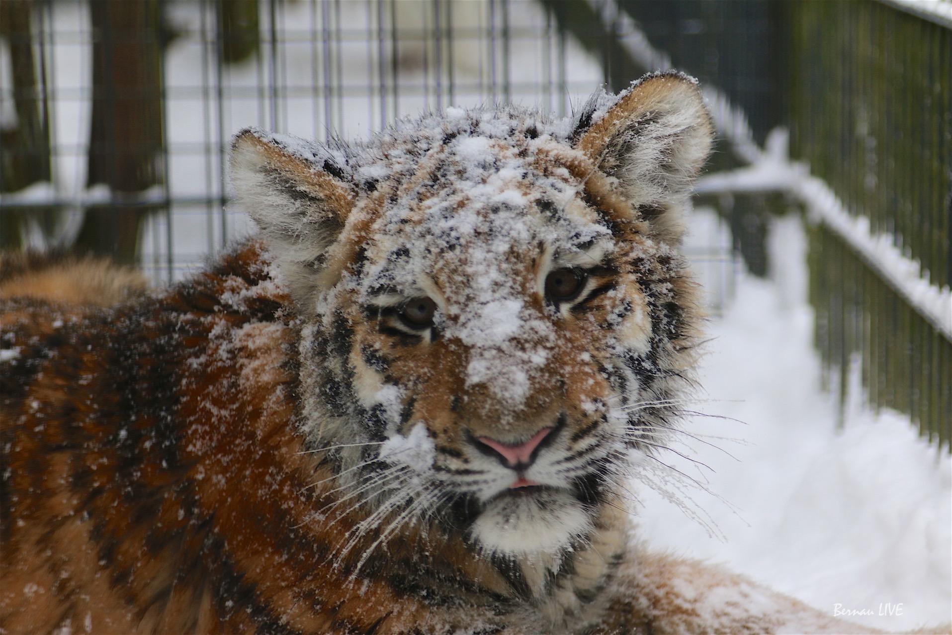 Zwischenstand: 11.716 Euro für Tiger DIEGO - Danke!