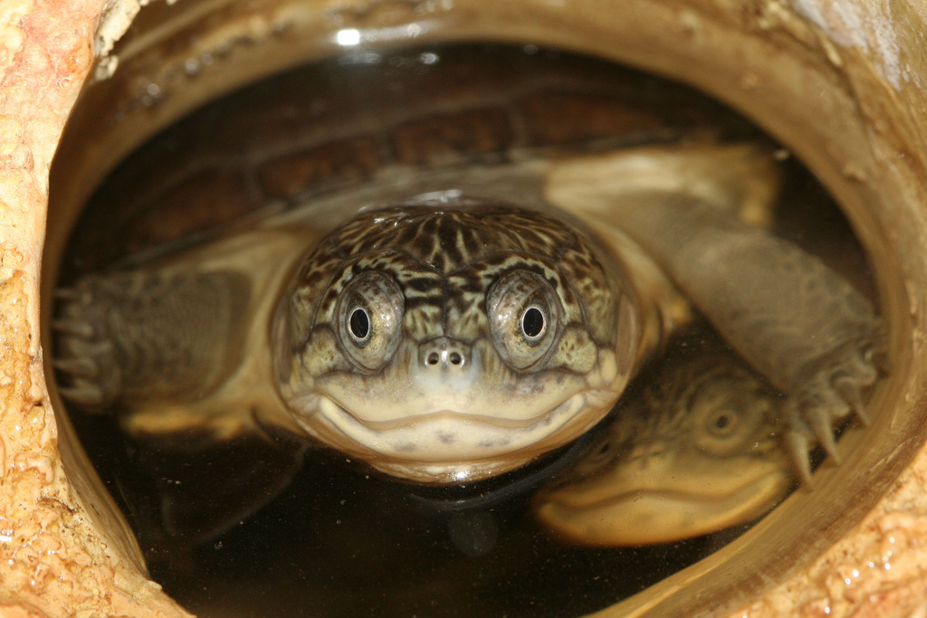 Photo of Bernau: Hallo im Wochenende – Heute ist im Übrigen World Turtle Day!