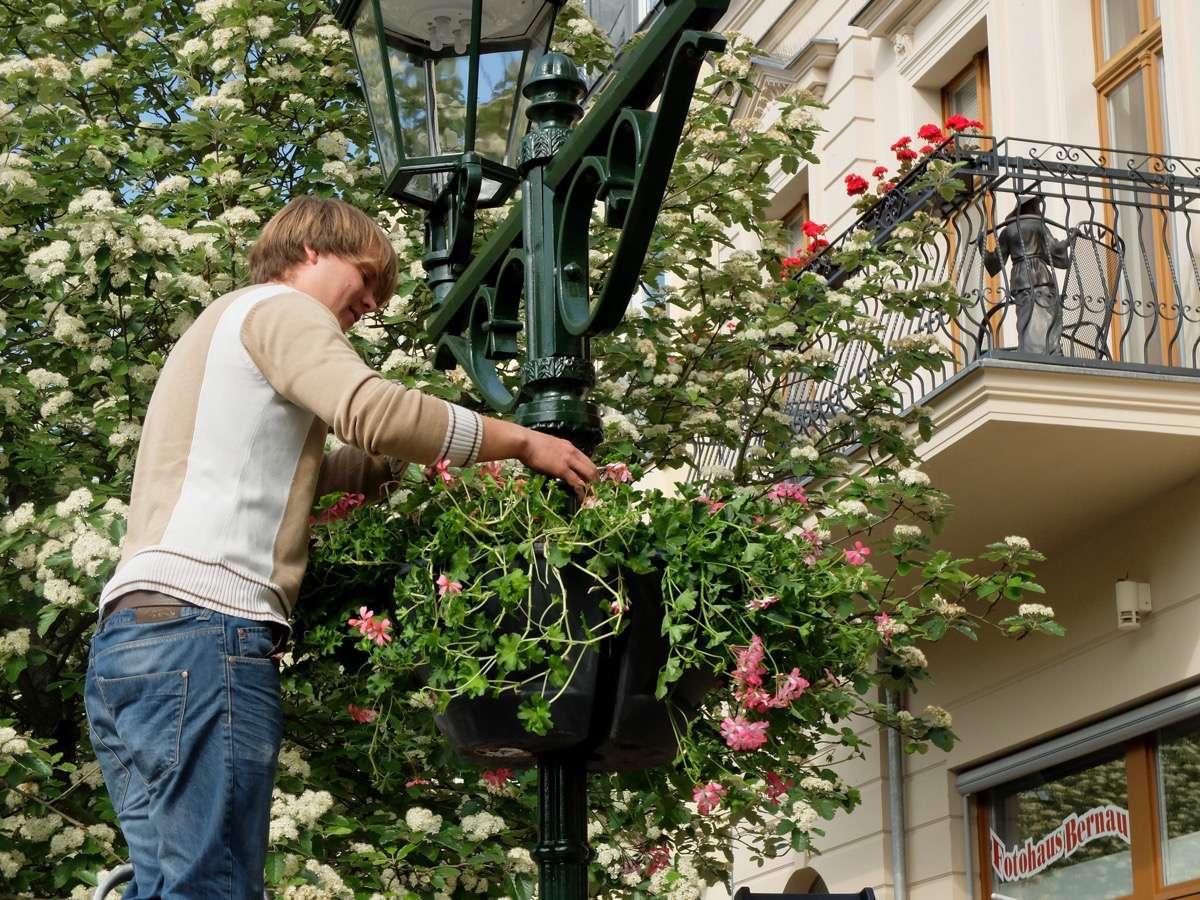 Blumenampelsaison in Bernau eröffnet