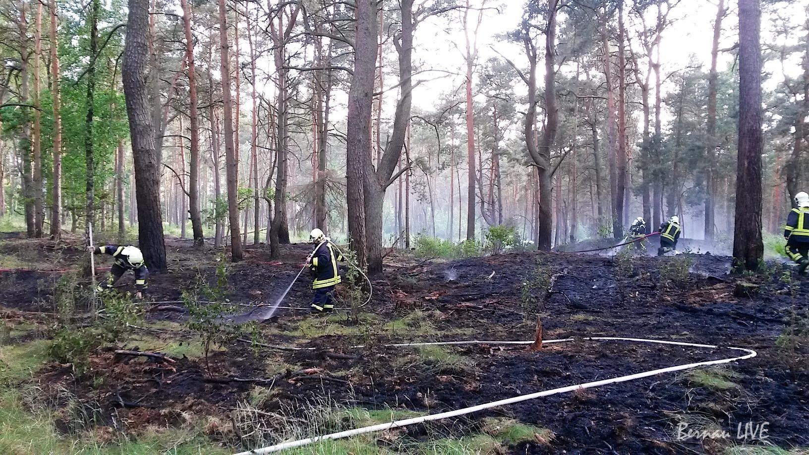 Photo of Wandlitz-Klosterfelde: Etwa 3.500 qm Waldbrand hielt Feuerwehren in Atem