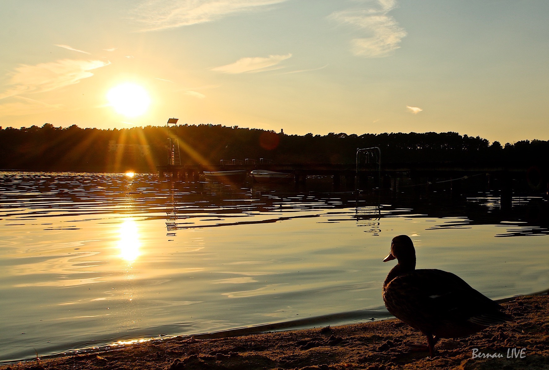 Strandbad Wukensee - Bernau LIVE, Sonnenuntergang, Wasser, Wukensee, Barnim, Sommer, Ente, Bernau, Biesenthal