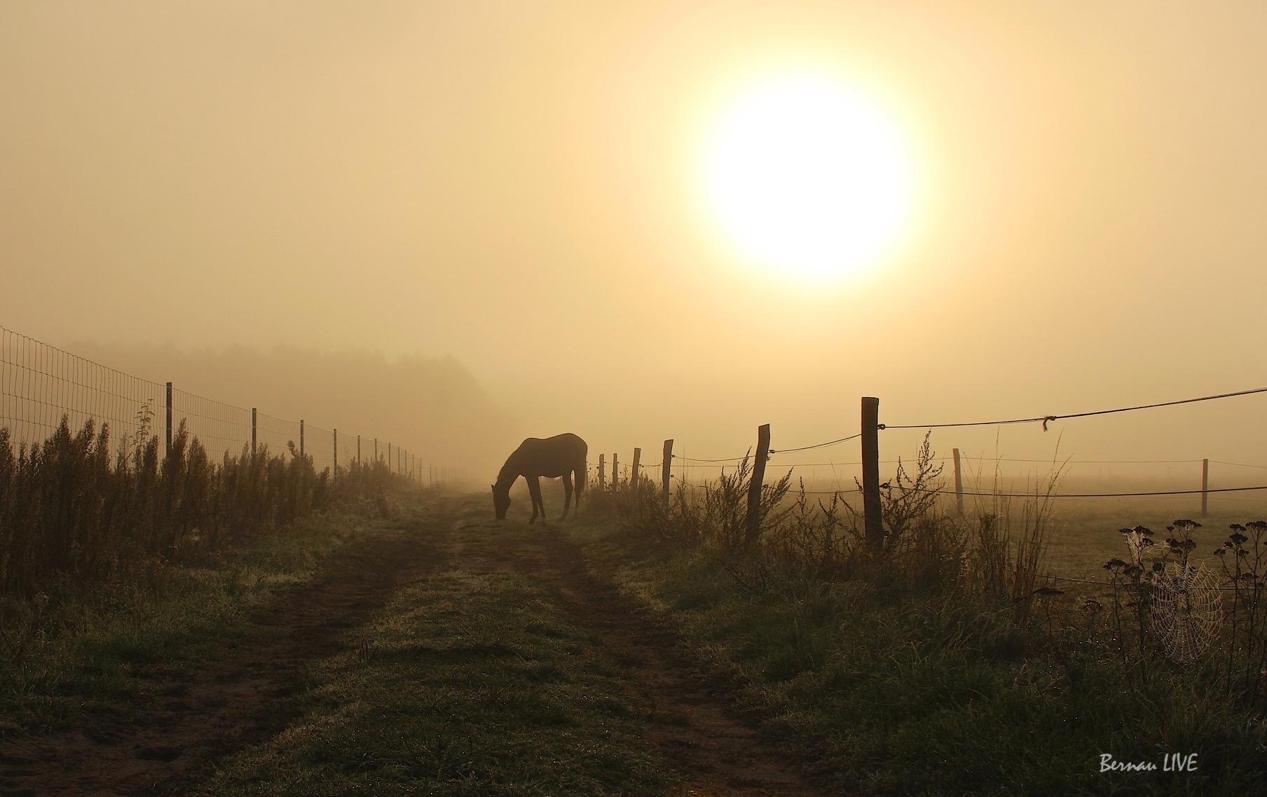 Photo of Guten Morgen Bernau und allen Drumherum – Pferd gefunden