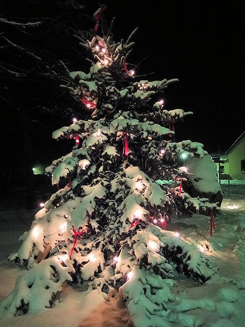 Weihnachtsbaum selber schlagen bernau bei berlin