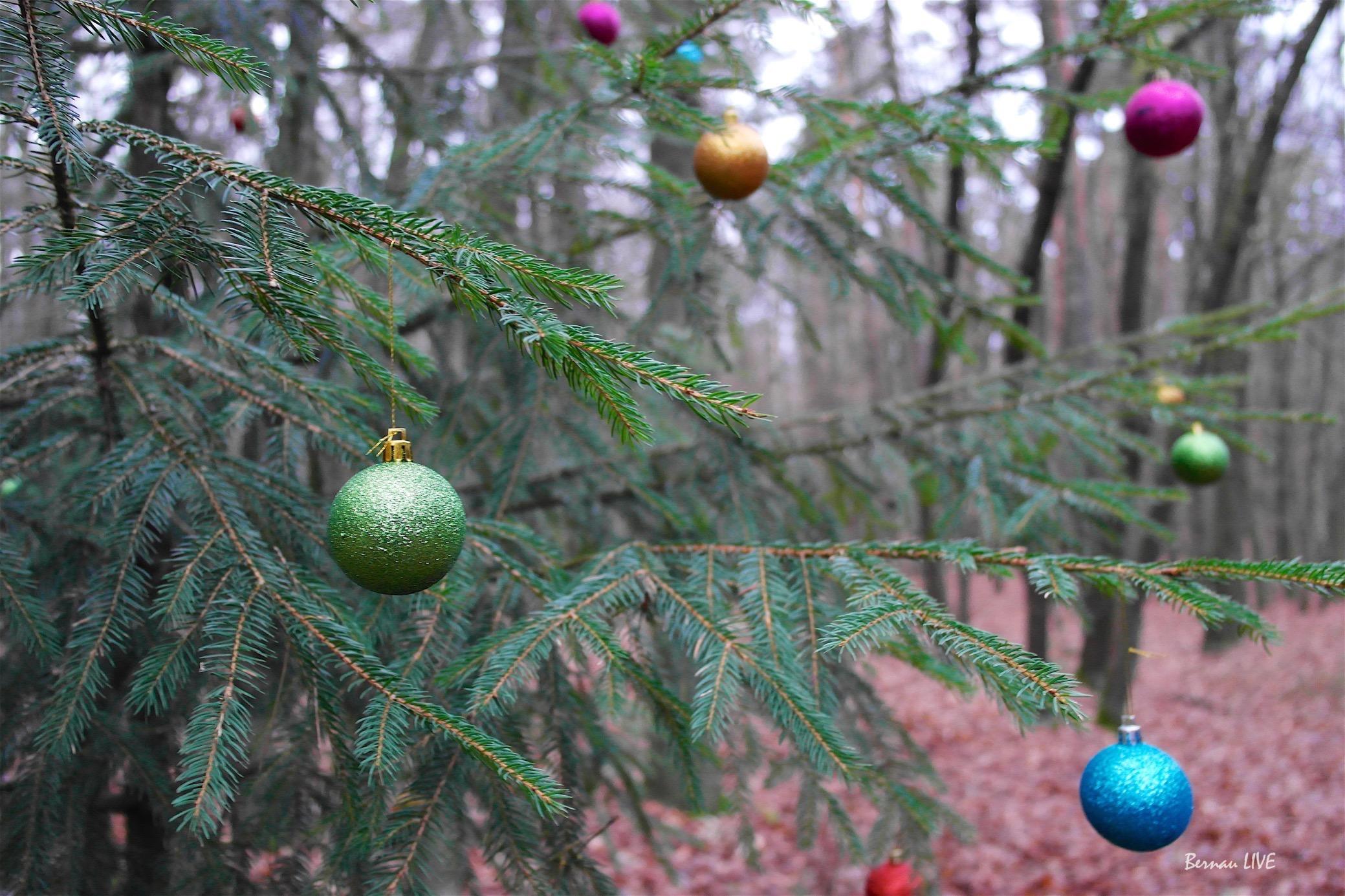 Weihnachtsbaum Herkunft.Grüße Vom Wohl Einsamsten Weihnachtsbaum Unserer Region
