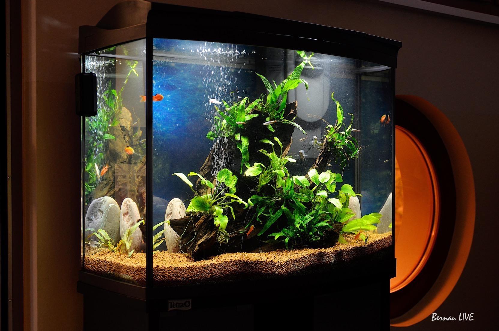 wasserwelten in bernau montessori kindergarten erhielt aquarium bernau live. Black Bedroom Furniture Sets. Home Design Ideas