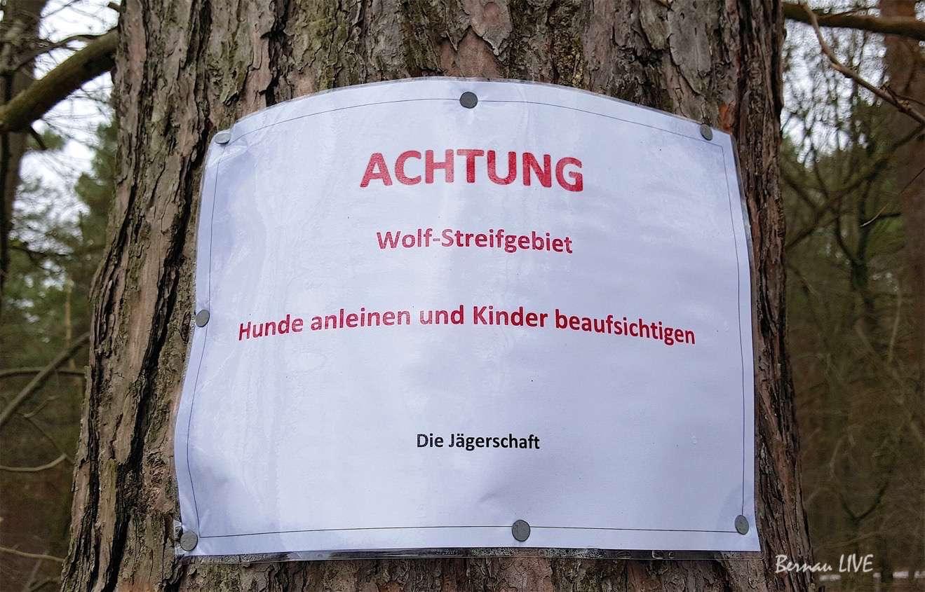 Bernau - Warnung vor dem Wolf