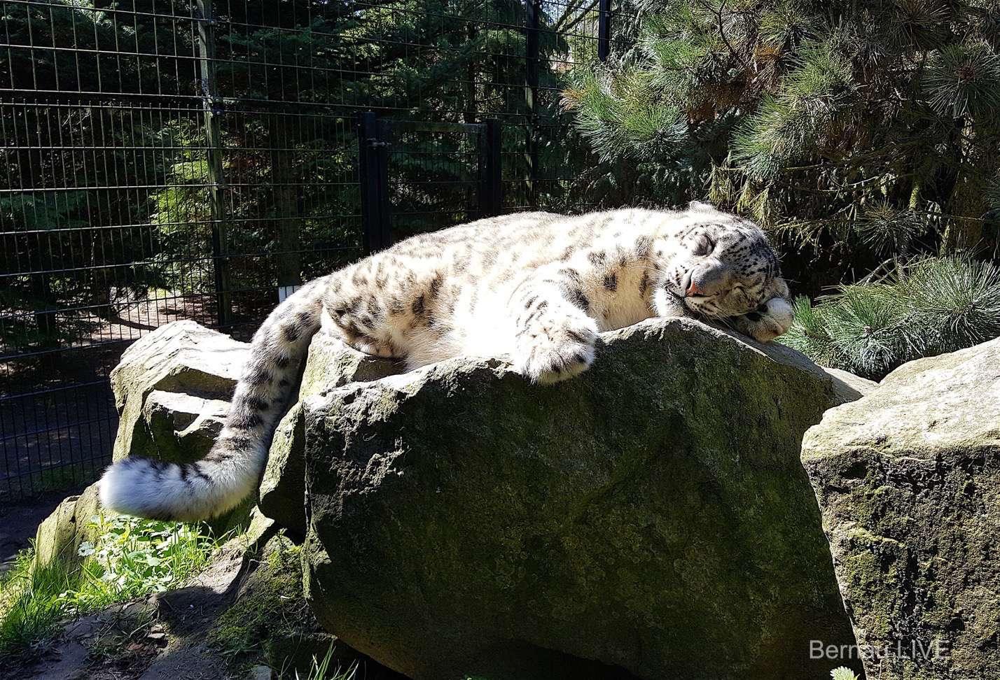 Wildkatzenzentrum Felidae