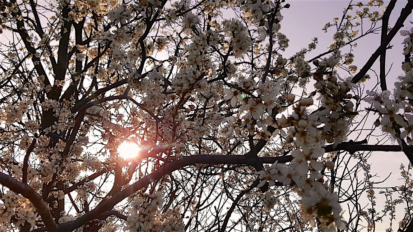 Photo of Moin! Sonne, 24 Grad und warum ich für Besuch zu alt bin
