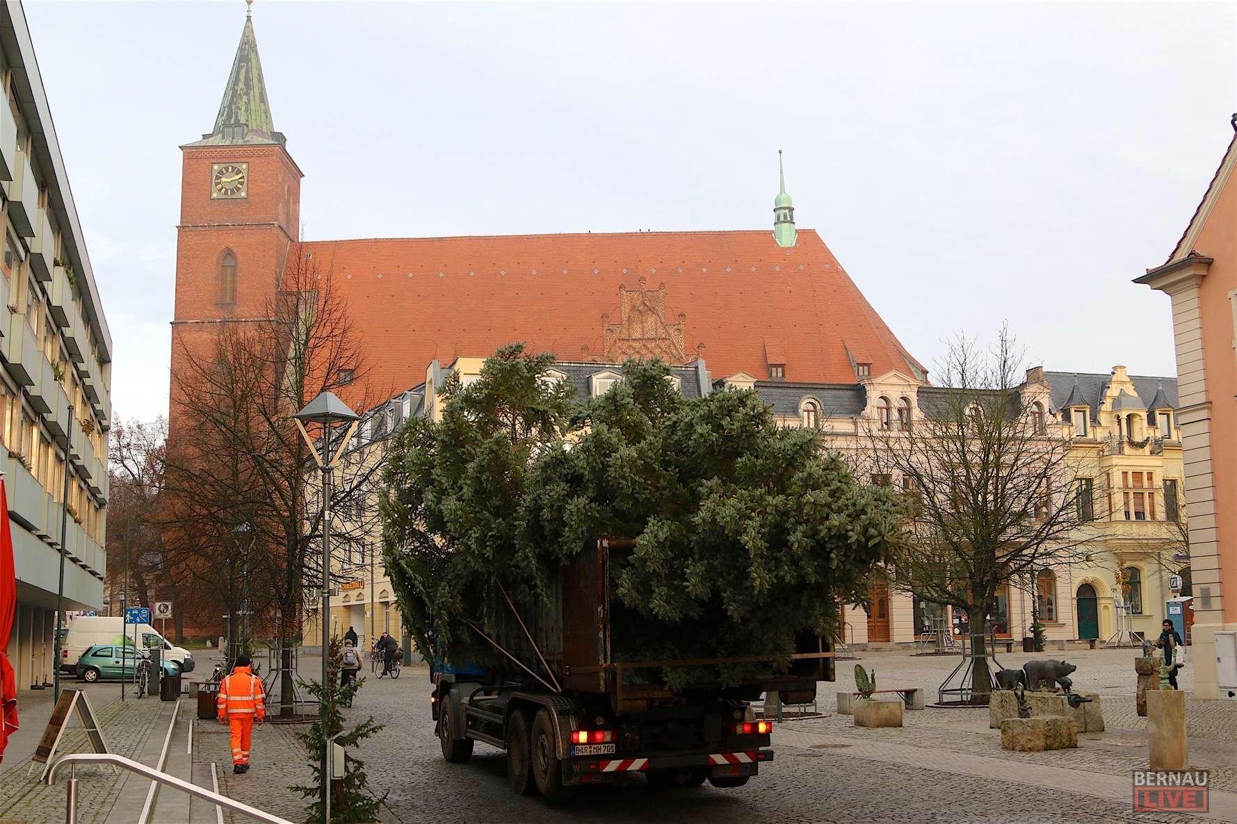 Weihnachtsbaum Selber Schlagen Berlin Brandenburg.Bernau Weihnachtsbäume Zum Selber Schlagen Im Bernauer Stadtwald