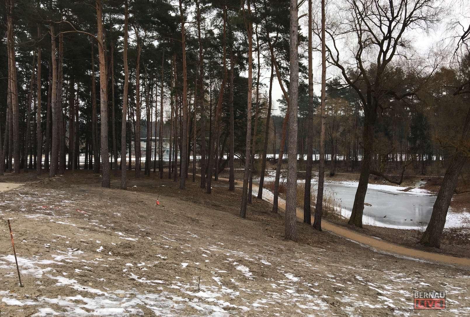 Bernau: Hunderte Bäume werden zur Zeit in Waldfrieden gefällt