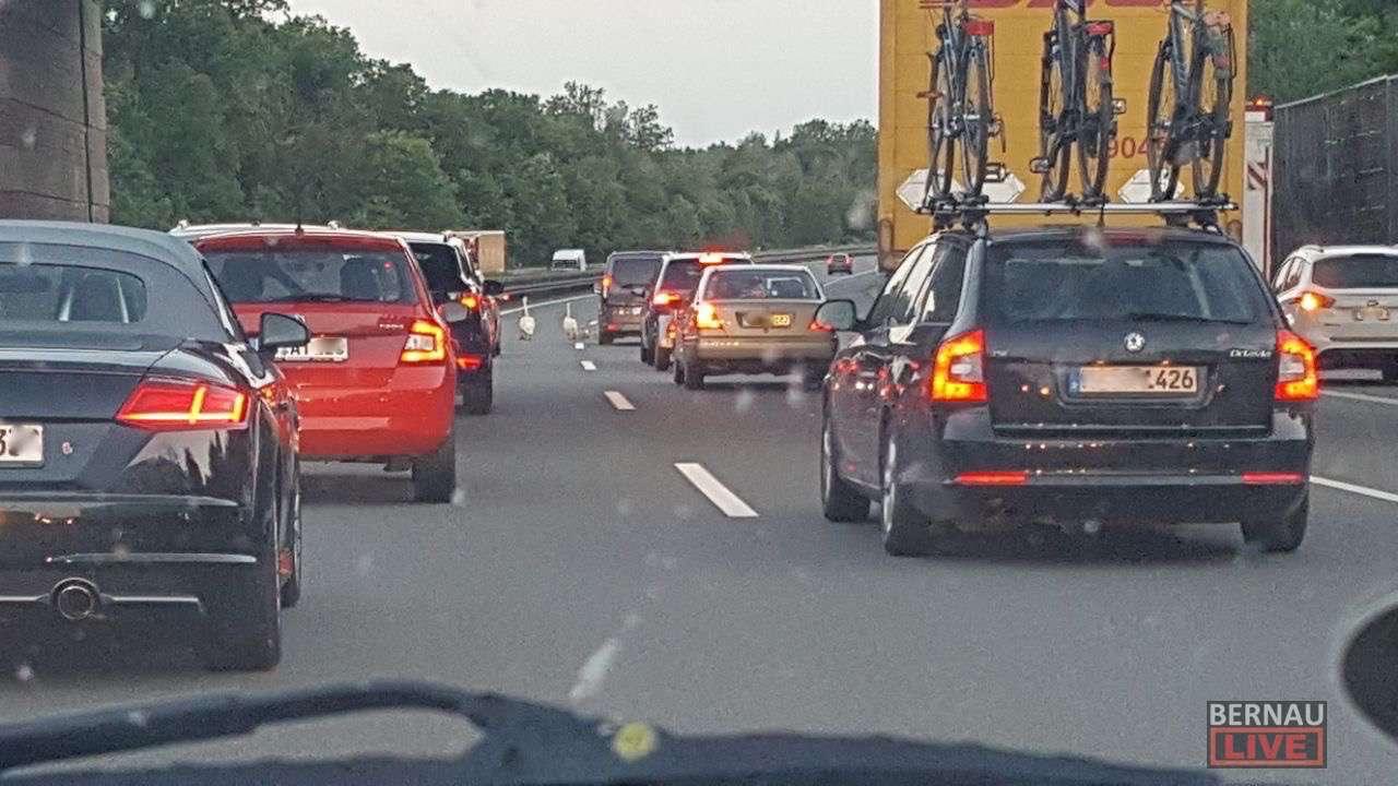 Verkehr Live