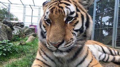 Grundsteinlegung: Na gut, dass wir gestern Tiger Diego besucht haben