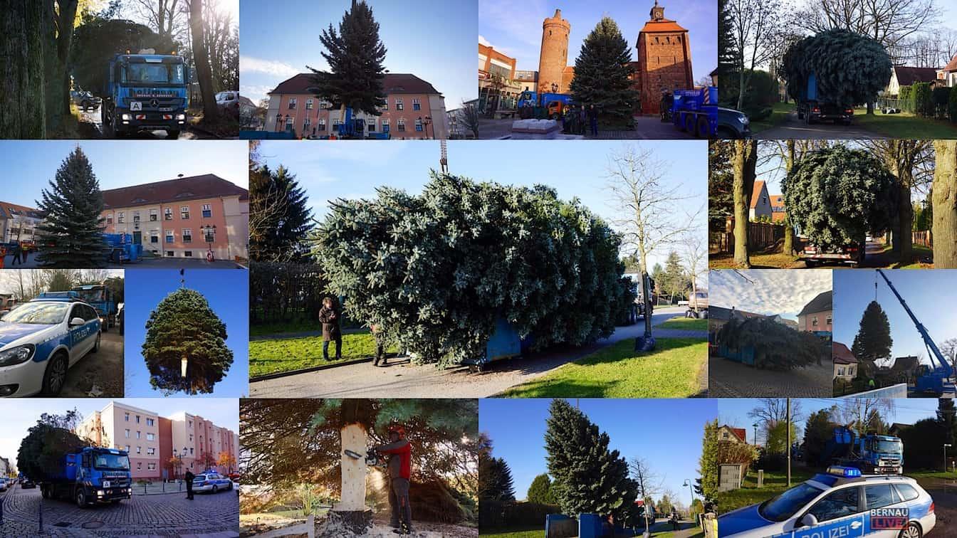 Bernau: Weihnachtsbaum im Doppelpack und Mega Logistik