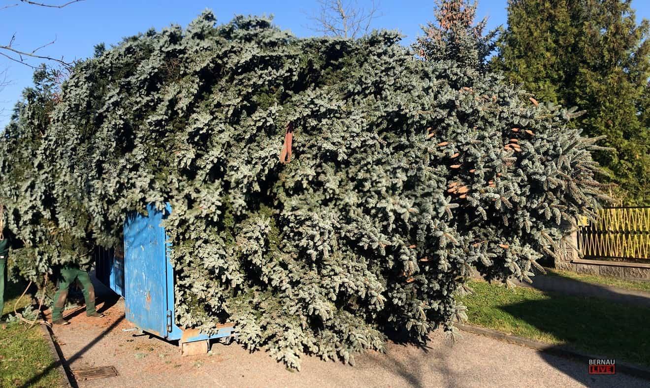 Bernau - Barnim: Hier findet Euer Weihnachtsbaum seinen letzten würdigen Platz