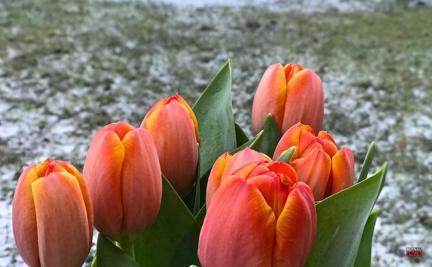Liebevolle Grusse Zum Heutigen Valentinstag Aus Bernau