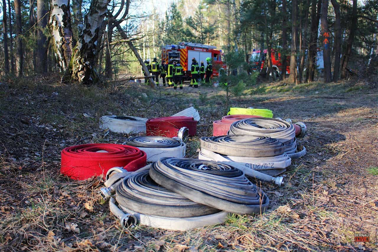 Barnim - Bernau - Waldbrand in Klosterfelde sorgte für Großeinsatz der Feuerwehren