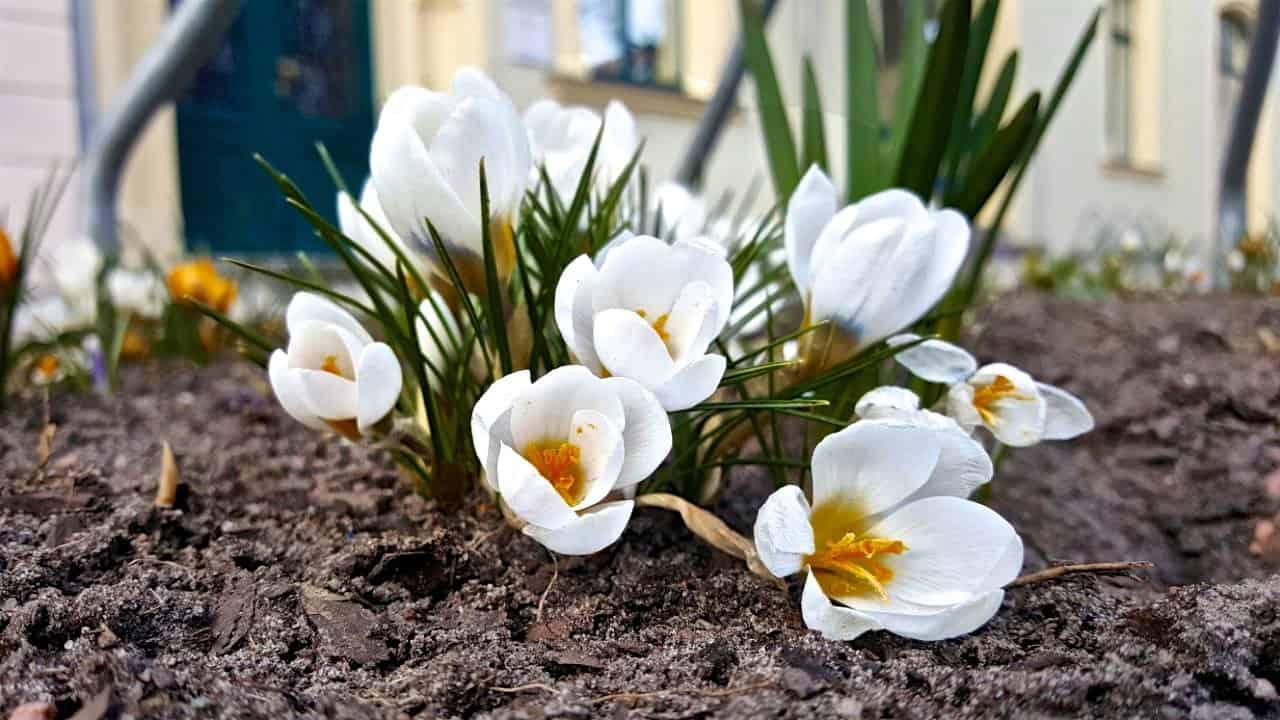 Endlich: Bernau taut auf und zeigt erste Frühlingserscheinungen