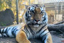 Langes Pfingstwochenende im Wildkatzenzentrum Tempelfelde