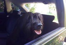 Bitte lasst keine Tiere im Auto - Einsatz der Feuerwehr Wandlitz