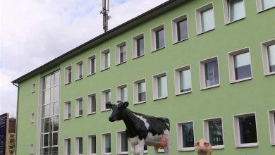 Bernau: Das IFN Schönow lädt heute zum Tag der offenen Tür ein