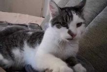 Panketal: Von einer zugelaufenen Katze und einer langen Nacht
