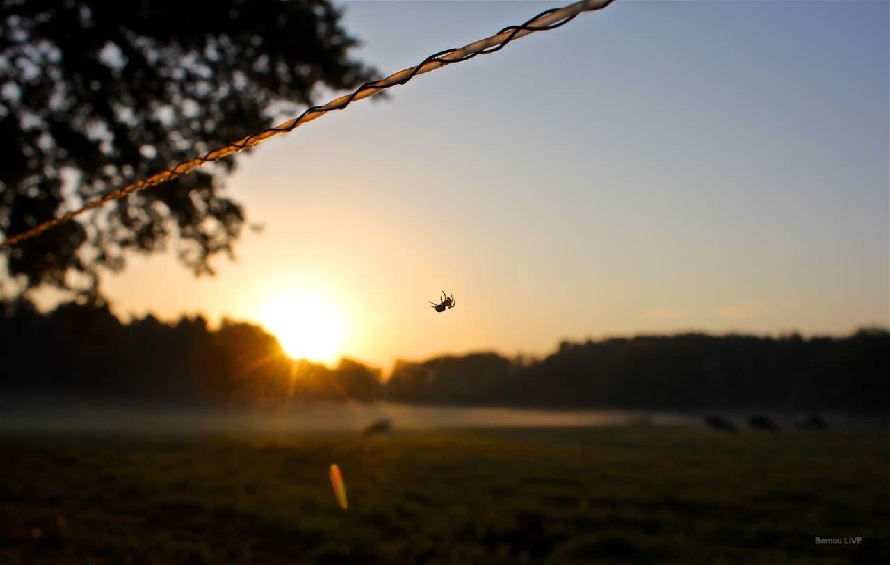 Sonne Und Bis Zu 18 Grad Guten Morgen Und Einen Schönen Dienstag