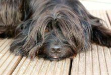 Bernau: Generelle Anleinpflicht für Hunde in Bernau und allen Ortsteilen?