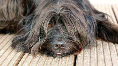 Generelle Anleinpflicht für Hunde in Bernau und allen Ortsteilen?