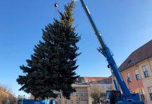 Weihnachtsbaum auf dem Marktplatz in Bernau aufgestellt