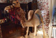 Zauberhaftes Kamel aus Bernau sucht ein liebevolles Zuhause