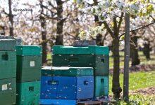 Bernau: Diebe öffneten Bienenkästen worauf die Bienenvölker starben