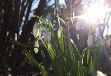 Wochenende, ein bisschen Frühling und Veranstaltungs-Tipps