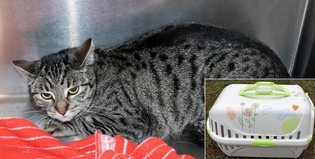 Veterinäramt LK Barnim: Wer kann Hinweise zur ausgesetzten Katze geben?