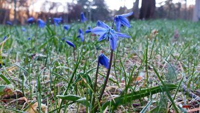 In gut 15 Stunden beginnt der kalendarische Frühling, guten Morgen