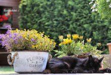 Polizei rettet Katze aus misslicher Lage: Sie hatte eine Dose auf dem Kopf