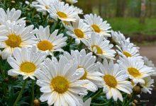 Wir wünschen allen einen schönen und ruhigen Sonntag