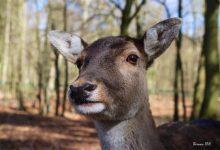 Buntes Programm zu den Osterfeiertagen im Wildpark Schorfheide