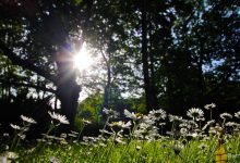Blumen, Sonne, Stadtpark, Bernau