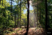 Wald - guten Morgen