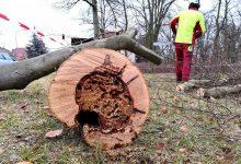 Bernau: Ab Montag Baumpflegearbeiten in der Schönower Goethestraße
