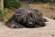 Hundeköder mit Nägeln gefunden - Ordnungsamt bittet um Vorsicht