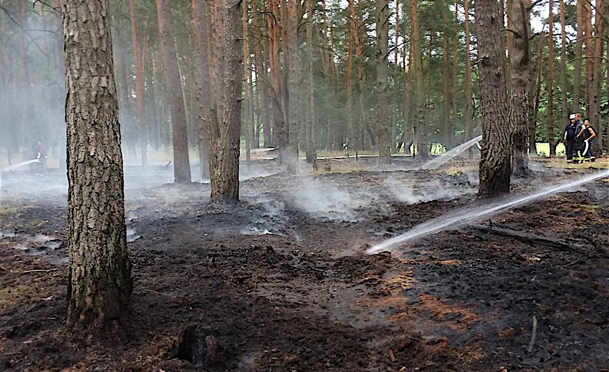 Kreisfeuerwehrverband Barnim bittet um Beachtung der Waldbrandstufen