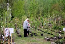 Photo of 1.000 neue Bäume sollen in Bernau bei Berlin für mehr Grün sorgen