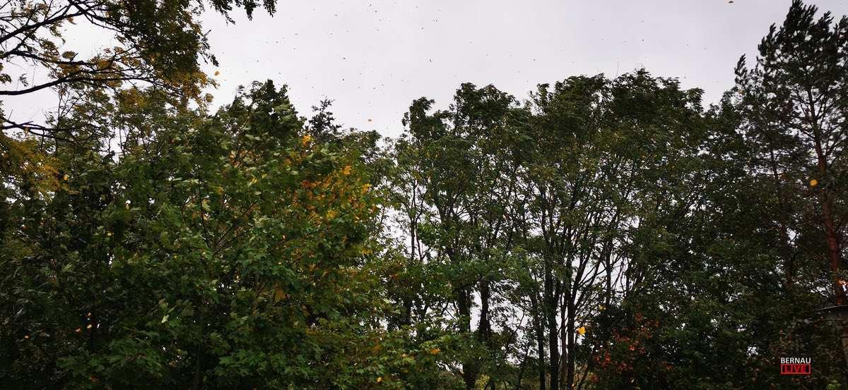 Sturm Herbst Bernau Bernau LIVE0000