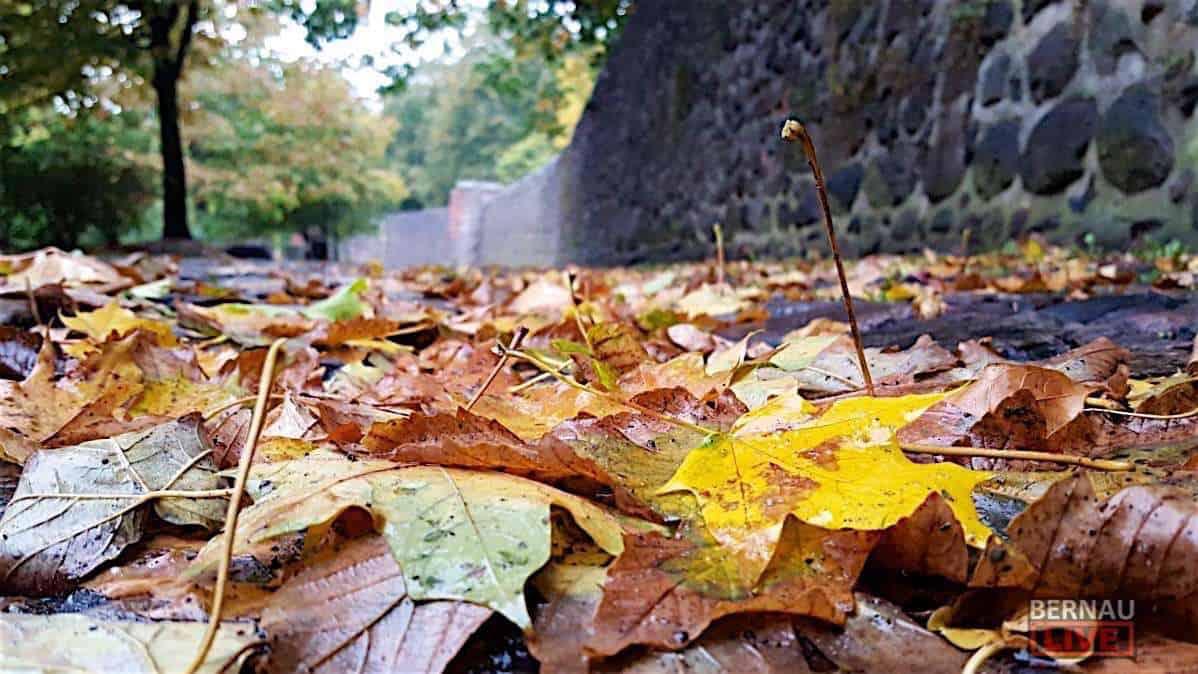 Herbst Laub Stadtmauer
