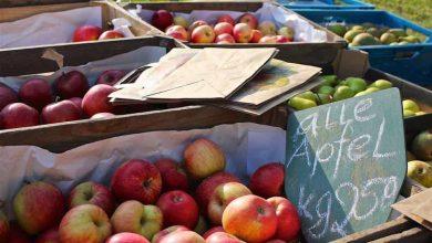 Photo of Traditioneller Obsttag in den Barnimer Baumschulen Biesenthal
