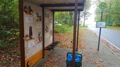 Photo of Sinnlose Zerstörung: Bushaltestelle am Wildkatzenzentrum Tempelfelde