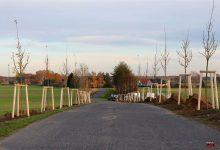 Photo of Heute wurden in Bernau die Ersten von 1.000 neuen Bäumen gepflanzt