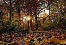 Photo of Ein bisschen Sonne in Sicht – Euch einen schönen Donnerstag